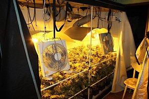 Pěstírna konopí v rodinném domě v Hovězí vydala sedm stovek rostlin v různých stádiích růstu a čtyři stovky dalších rostlin, které se sušily. Dále také několik igelitových pytlů sušené travní hmoty.