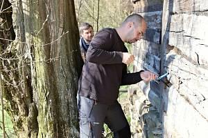 Vědci z brněnské Mendelovy univerzity odebrali vzorky, z nichž budou v laboratoři zjišťovat stáří trámů použitých na stavbu vybraných sušáren ovoce na Valašsku.