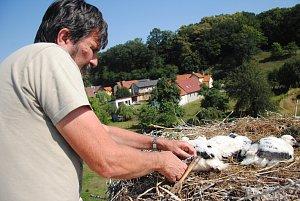 Ochránci přírody nahlížejí do hnízd a kroužkují mladé čápy