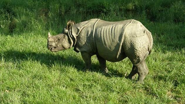 Královský národní park Chitwan
