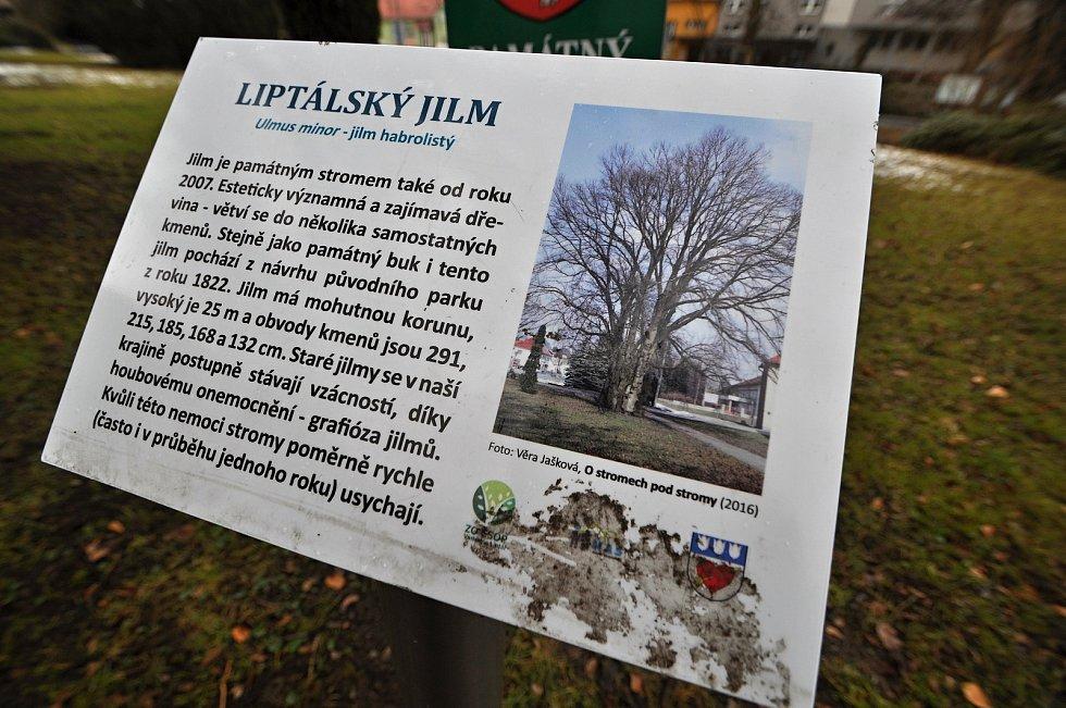 Liptálský jilm (památný strom) před zámkem v Liptále.