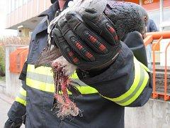 Holuba z drátů vysvobodili hasiči