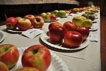 Exponáty výstavy s názvem Úroda z polí, zahrad a sadů aneb Valašský hortikomplex, která se koná v Janíkově stodole ve Valašském muzeu v přírodě v Rožnově pod Radhoštěm od 12. října do 20. října 2019.