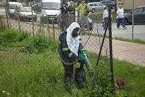 Hasiči zasahovali proti včelímu roji