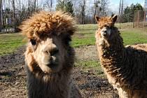 Zvířata ve Fauna parku - dětském ráji ve Valašském Meziříčí; pátek 13. března 2020