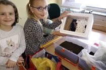 Školáci ze Základní školy Záhumení v Rožnově pod Radhoštěm se pustili do vermikompostování odpadu s využitím kalifornských žížal.