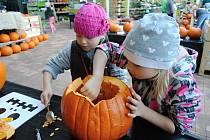 Na dýňové království se o prvním říjnovém víkendu proměnilo Zahradní centrum ve Valašském Meziříčí. Lidé tady mohli z baňatých oranžových dýní vyřezávat veselá i hrůzu nahánějící strašidla a odnést si je domů, třeba jako výzdobu pro blížící se halloween.