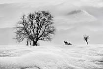 Na snímku je bronzovou medailí v kategorii černobílých snímků oceněné foto nazvané Zima 2018 kroměřížského fotografa Jána Záhornackého.