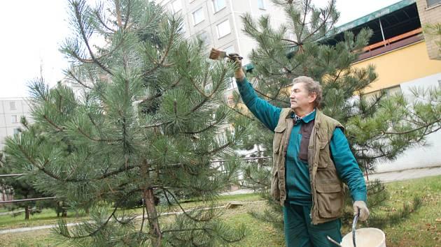 Zloději stromků budou zapáchat