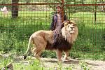Stále populárnější lev Fufi žije ve Zděchově.