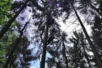 Členové Horské služby Beskydy zachraňují v sobotu 1. června 2019 paraglidistu z výšky asi dvaceti metrů pod Malou Stolovou.