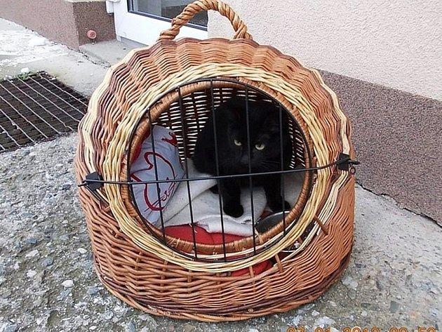 Kotě někdo odložil v zahradě domu v Rožnově i s přenosným kotcem.