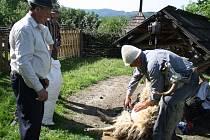 Jaro ve valašské dědině rožnovského skanzenu