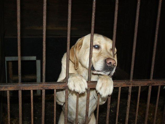 Optimální podmínky pro nedobrovolný pobyt psi ve vsetínském útulku nemají. Technické služby však hodlají stav změnit. V bývalé kotelně (červená vrata) najdou opuštěná zvířata azyl.