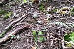 Předposlední týden v srpnu 2019 byly lesy na Valašsku plné hub.
