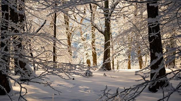 Ladovská zima v lese.