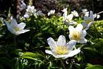 Jaro na Horní Bečvě