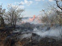Suché klestí se rozhodl spálit uprostřed lesa.