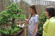 Informační centrum Zvonice na Soláni budou až do neděle 19. června zdobit bonsaje mistra Pavla Slováka a jeho žáka Miroslava Škrabala