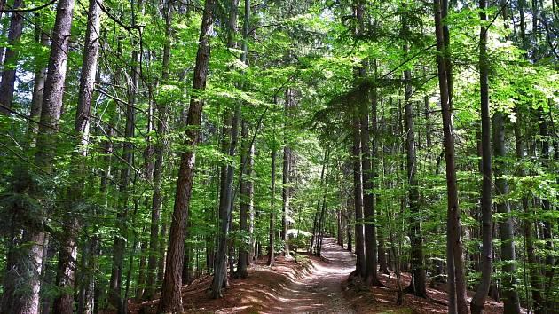 Krása lesa