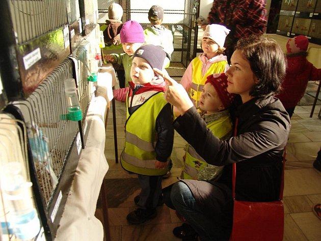 Ve Vsetíně se koná výstava papoušků a kanárů.