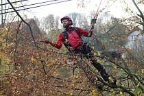 Specializovaná firma v čele s arboristy Antonínem Ambrosem a Radovanem Kučerou ošetřila ve středu 17. října 2018 dva Stromy svobody v Senince.