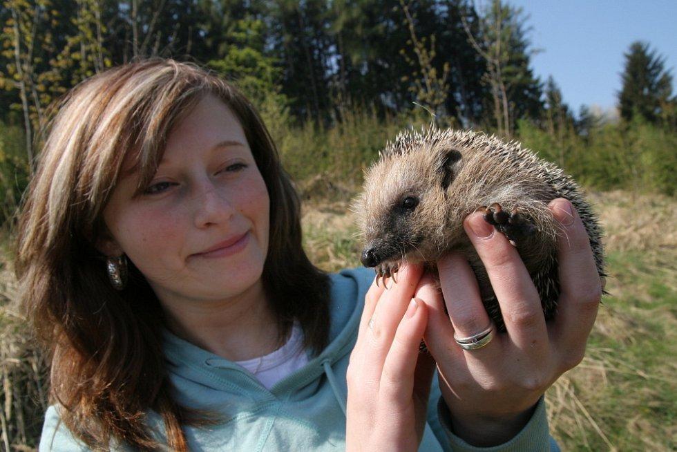 Ochránci zvířat ježky přes zimu vykrmili a na jaře vypustili do volné přírody poblíž osady Pulčín.