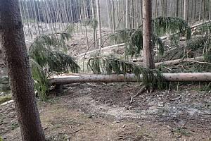Traily Bike arény Vsetín poničené těžkou technikou při kůrovcové lesní těžbě.