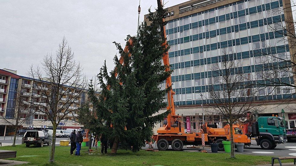 Patnáctimetrový smrk, který letos jako vánoční strom zdobí vsetínské náměstí Svobody, darovali městu Noemi aJaromír Hurtovi a Dana aAleš Konviční.