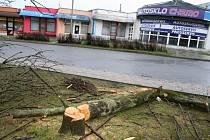 Strom naříznutý vandalem museli ve Vsetíně pokácet profesionální hasiči.