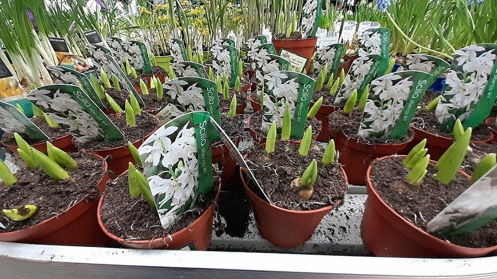 Do prodejen zahradnických potřeb dorazilo jaro. Lidé se ptají po okrasných rostlinách i ovocných stromcích. (Na snímku Zahradní centrum pod kloboukem Valašské Meziříčí).