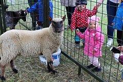 Sedmnáctá krajská soutěžní chovatelská výstava králíků, holubů a drůbeže se uskutečnila o víkendu