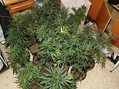 V pěstírně konopí v bytě ve Valašském Meziříčí opečovával dvaatřicetiletý muž čtyřiadvacet rostlin konopí.