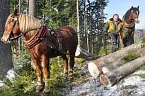 Zahájení těžby dřeva na obnovu vyhořelé chaty Libušín na Pustevnách v lesích v Prostřední Bečvě, úterý 15. listopadu 2016