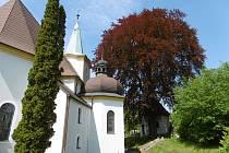 Červenolistý buk lesní u kostela svatého Archanděla Michaela v Lešné u Valašského Meziříčí.