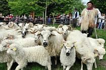 Valašské muzeum v přírodě v Rožnově pod Radhoštěm, vyhánění ovcí a další tradice