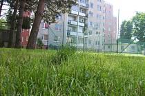 Obrovská nevole zavládla mezi částí obyvatel vsetínského sídliště Trávníky. Žlučí jim hnula kvalita prvního jarního sečení trávy na veřejných plochách této části města.