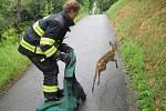 Vsetínští hasiči zachránili srnku, která spadla do nezakryté jímky