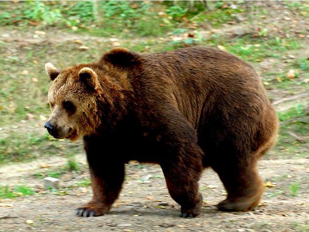 Medvěd se vrátil po dvou letech.