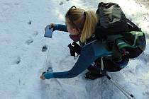 Ochránkyně přírody dokumentuje v terénu stopy při letošním mapování velkých šelem v Beskydech; únor 2020