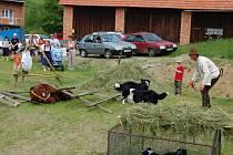 Na Valašsko se pomalu znovu vracejí ovečky