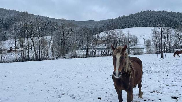 Koně v údolí Léskové