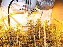 Policisté odhalili v březnu 2016 v Rožnově pod Radhoštěm pěstírnu konopí. Našli na dvě stě rostlin.