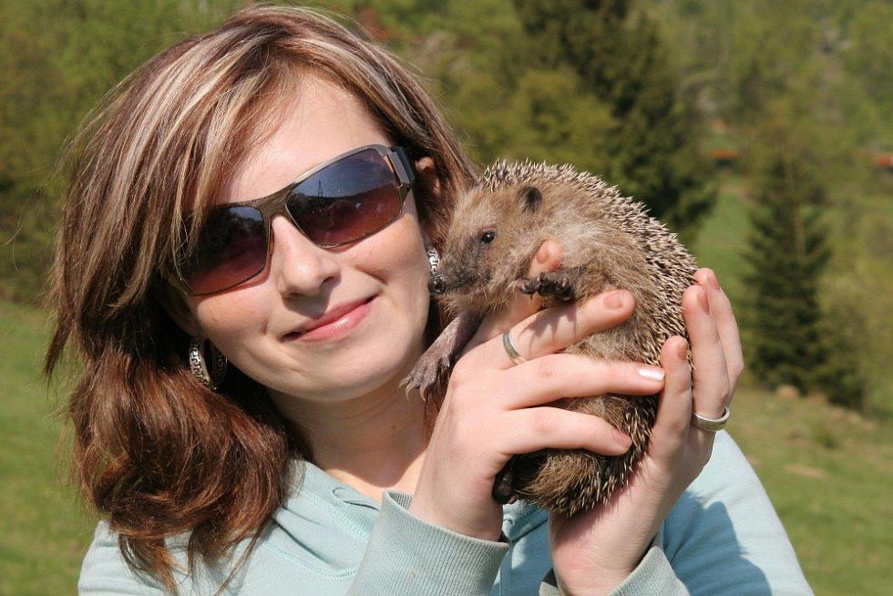 Jednoho z ježků, který se v pátek vrátil do volné přírody poblíž osady Pulčín, představila Magdaléna Jugová.