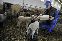 Chov ovcí je hlavní náplní činnosti firmy Gone v Prlově. Na snímku přikrmuje jehňata ošetřovatel Vojtěch Žák.