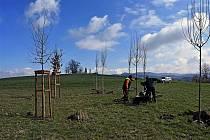 Pracovníci společnosti Městské lesy a zeleň vysazují 57 jabloní, topolů a dubů na vrchu Helštýn ve Valašském Meziříčí.