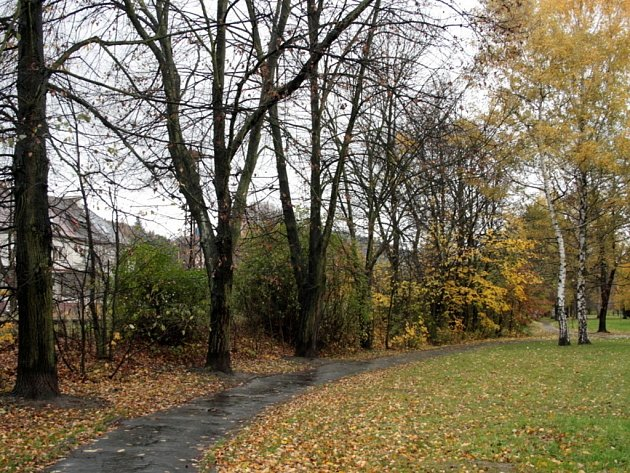 Na konci listopadu zmizí až třicet stromů na rybnické i na trávnické straně parku.