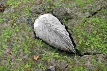 Škeble asijská nalezená při průzkumu Zuberského náhonu a Hamerských rybníků u Zubří