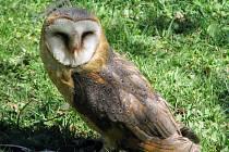 Organizátoři oslav Dne Země ve vsetínské Panské zahradě nabídly ve středu 22. dubna návštěvníkům bohatý program. Nechyběla projížďka na pálavách, rukodělné práce, ukázky dravých ptáků ani hry s ekologickou tématikou