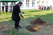 Lidickou hrušeň vysadili ve středu 28.11.2018 na zahradě ZŠ Žerotínova ve Valašském Meziříčí. Starosta města vkládá tubus pro budoucí generace ke kořenům stromu.